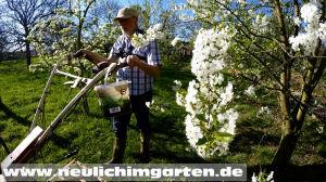 Fruehjahr im Garten