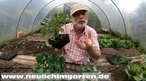 gute Gemsepflanzen kaufen