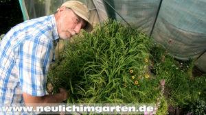 Reisanbau in Deutschland