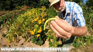 Welche Pflanzen giessen