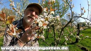 Nashis im Garten anbauen