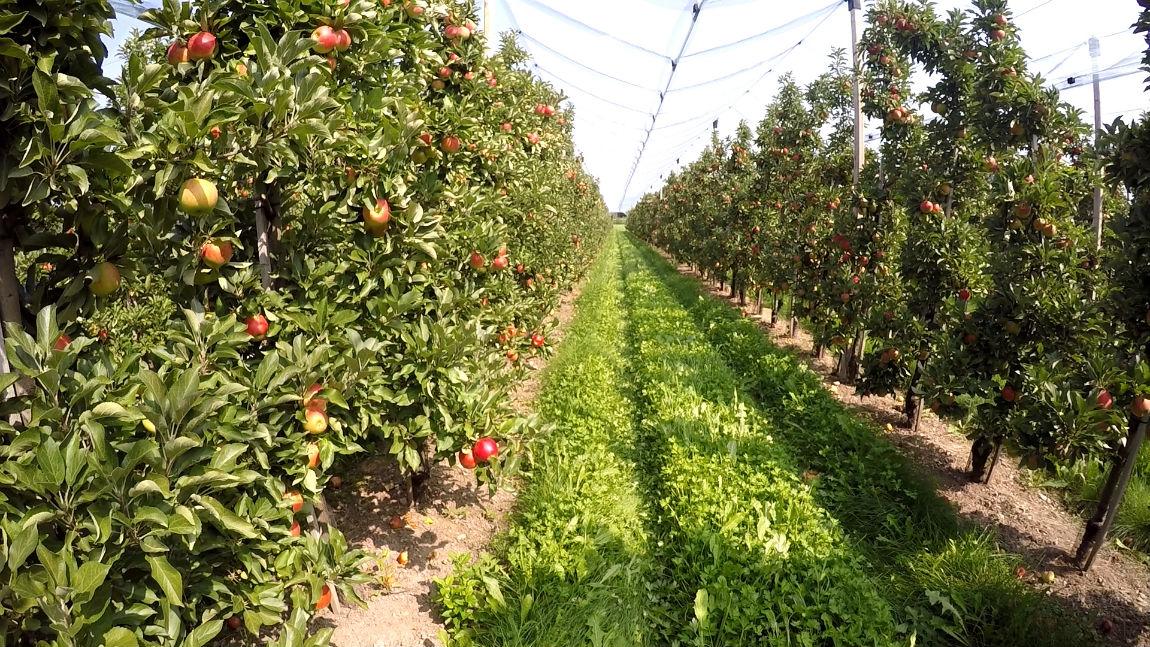 Apfelbaum Pflanzen Wann