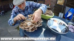 Pilze selbst ernten