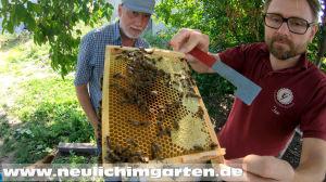 Jan und die dunkle Biene