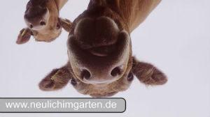 Fleischrinder Thumbnail