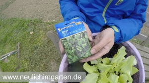 Salate pflanzen