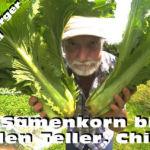 Vom Samenkorn bis auf den Teller ChiHiLi Beitragsbild
