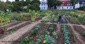 Gartenyoutuber bei der Arbeit