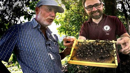 Dunkle Biene Beitragsbild