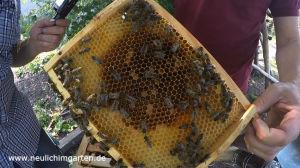 Dunkle Bienen halten