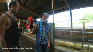 im Kuhstall