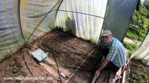 Silberzwiebeln selbst anbauen