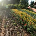 Der rasend schnelle Gartenrundgang Beitragsbild