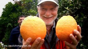 Orangen anbauen