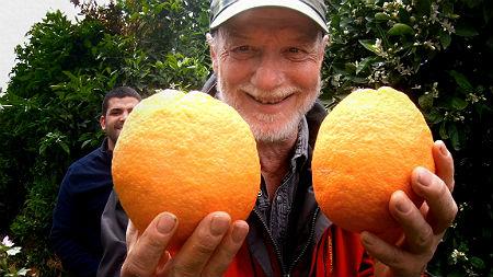 Orangen anbauen Beitragsbild