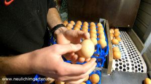 Eier von gluecklichen Huehnern