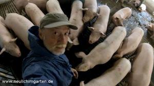 Von Schweinen umzingelt