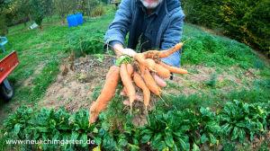 Die Ernte ist gut. Jetzt gilt es, meine Karotten auch fuer laengere Zeit zu lagern.