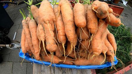Karotten lagern Beitragsbild