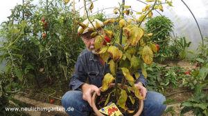 Chili im Topf anbauen