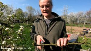 Fachmann erklaert den richtigen Obstbaumschnitt