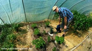 Chili im Garten anbauen