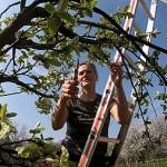 Obstbaumschnitt Teil 2 mit Britta