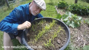 Reis selbst anbauen