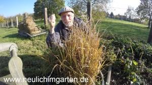 Reis selbst anbauen in Deutschland