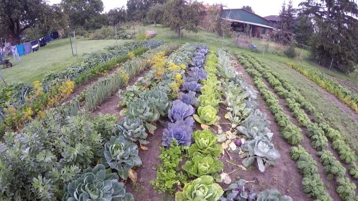 Gemüse im Selbstversorgergarten